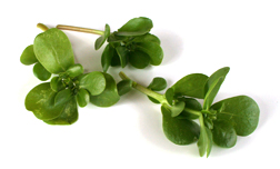 Purslane, Highest in Omega-3
