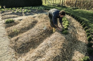 Mulch Straw, Plant Now!