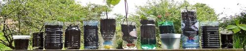 Setting up self watering plastic bottles is a snap!  And 100% cheap!