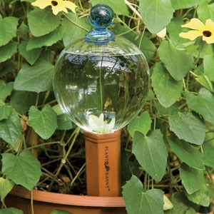 Watering globes are a beautiful addition to your garden, better than a crystal ball!