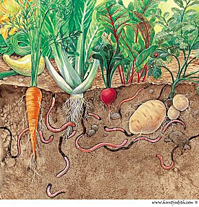 Soil is a living thing!  Preparation makes it super nutritious for your veggie plants!