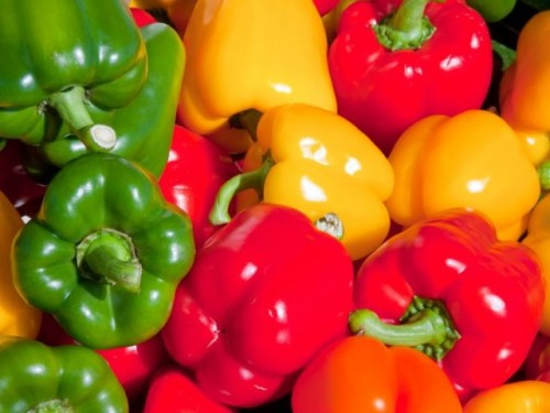 Grow a profusion of glorious sweet peppers!