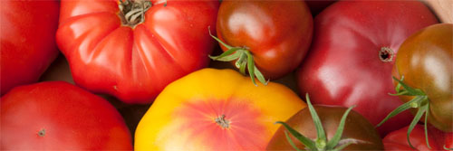 Grow absolutely Superlative Tomatoes!