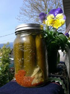 Homemade Pickles are high in Probiotics!