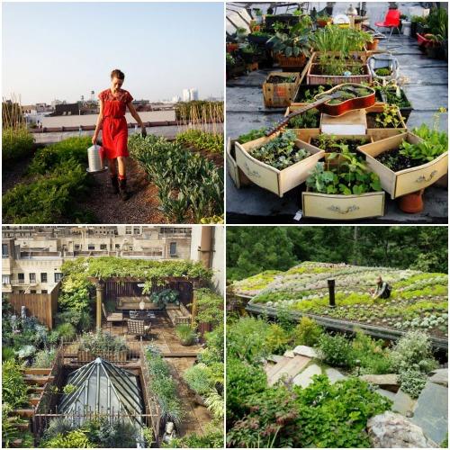 4 Rooftop Veggie Gardens