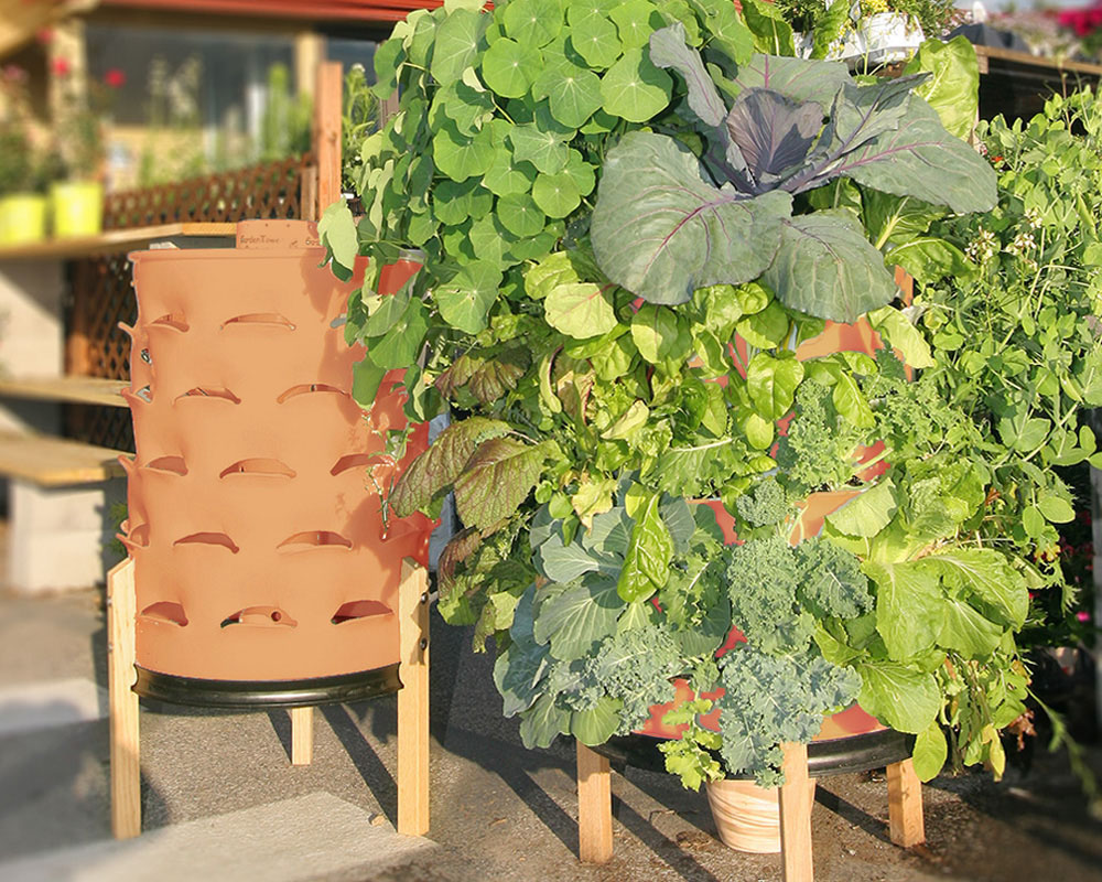 Vertical Veggie Garden in a 55 Gallon Drum Green Bean Connection