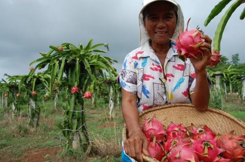 Edible Perennial, Amazing Dragon Fruits