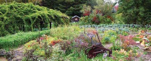 Perennials Edible Vicki Mattern