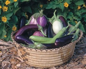 Eggplants Varieties in a Charming Woven Basket