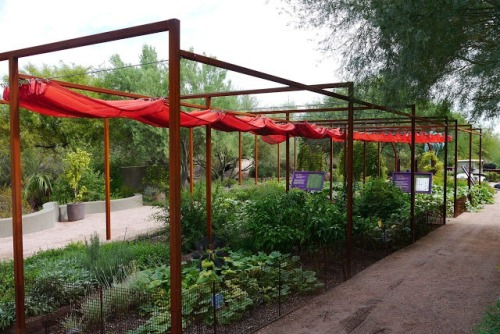 Shade Sliding Canopy, used by permission from RockRose Blog! At Desert Botanical Garden.