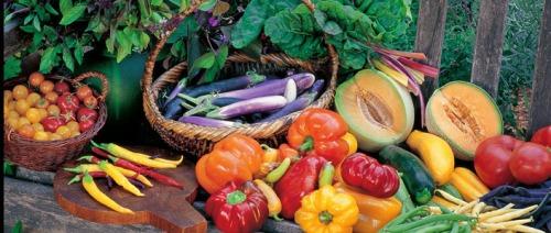 Delicious Summer Veggies Harvest