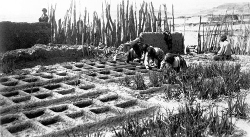 The Zuni people developed this waffle-garden design, which is still used today as an ecological method of conserving water. Photo by Jesse Nusbaum, 1911 New Mexico.