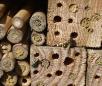 Solitary Bee Nests in 4X4s and Bamboo