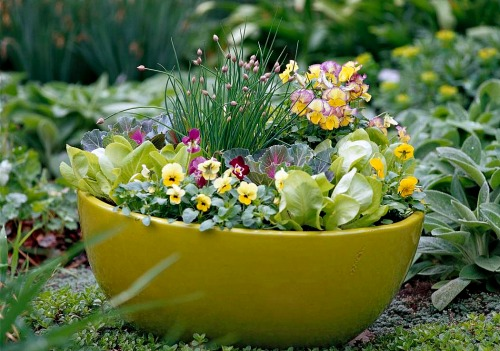 Container Vegetable Living Gift - Lettuces Edible Flowers