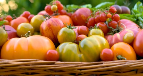Tomatoes Harvest Basket