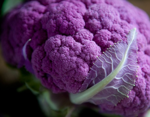 Cauliflower Purple Leaf