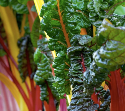 Chard Super Healthy and Colorful