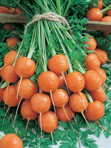 Carrot French Heirloom Parisian