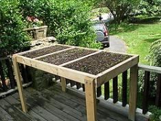 Container - Salad Table, Mesclun, Successive Plantings