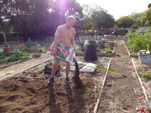 Soil Building Pilgrim Terrace Community Garden Santa Barbara Peat Manure