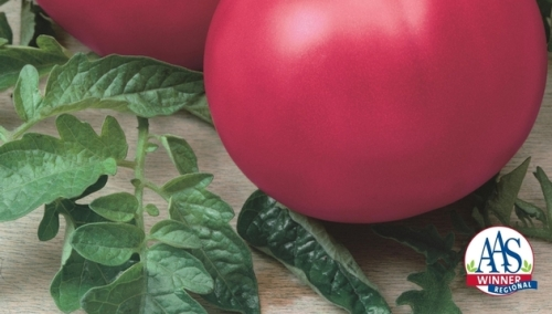 Tomato Chef's Choice Pink F1 Beefsteak, 2015 AAS Vegetable Award Winner
