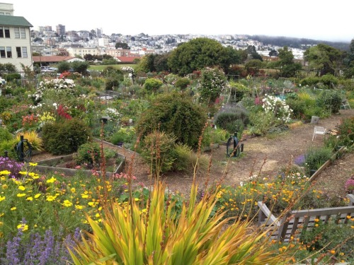 Urban Community Garden, Fort Mason, San Francisco CA