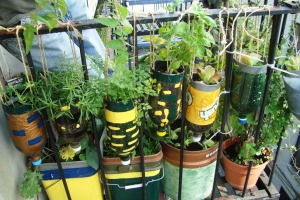 Creative Container gardening on your Balcony!