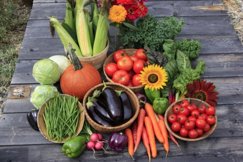 How to Harvest & Store Summer Veggies Abundance