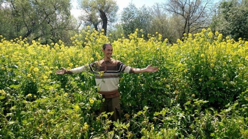 San Francisco Permaculture Guild Man with outspread arms standing in Mustard taller than he is!