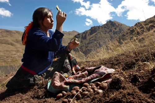 SeedSaving Blessing Peru