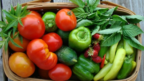 Summer Harvest Basket of Super Fresh Veggies!