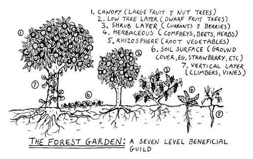 Food Forest - Forest Garden 7 Level Design