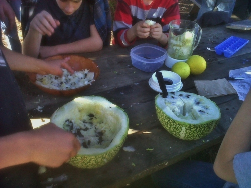 Preparing Fig Leaf Squash, Chilacayote ~ Cucurbita ficifolia smoothies! Waldorf School