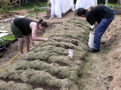 Soil No Till Lasagna Compost in Place, Sheet Mulching,