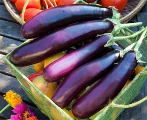 Eggplant Purple Long Shiny Harvest Basket