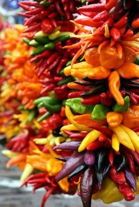 Pepper! Colorful Decorative Ristras!