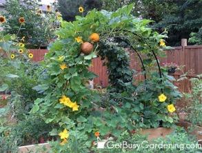 Trellis Squash Melon Cucumbers