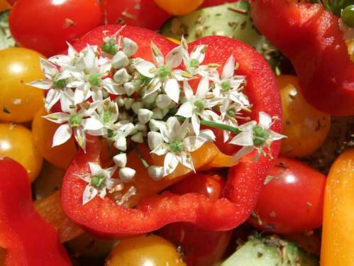 Tasty Red Bell Pepper, Tomatoes, Edible Garlic Flowers!