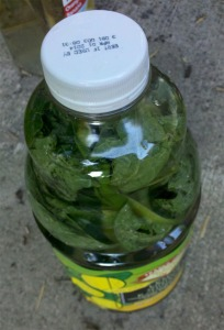 Compost Tea Bottle Comfrey