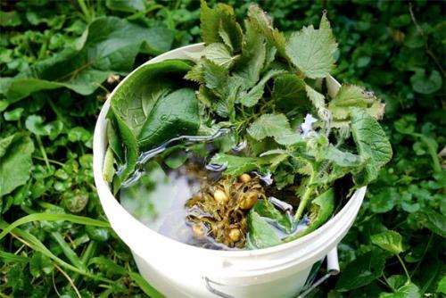 Compost Tea Seaweed & Herbs - Borage Nettle Comfrey Brew