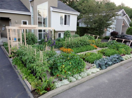 Food Not Lawn Formal Veggie Garden