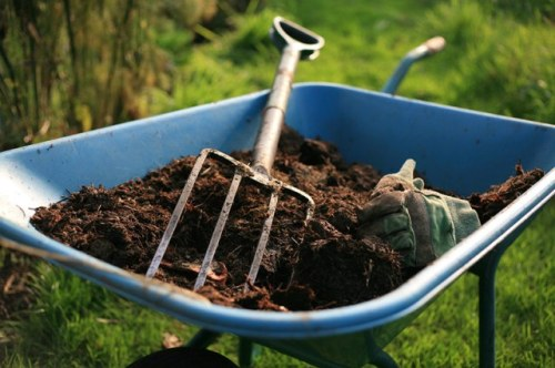 Soil Prep! Blue Wheelbarrow of Compost ready to apply with spade fork!