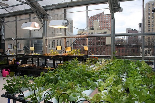 Rooftop greenhouse with a view of the city! Germany Fraunhofer UMSICHT