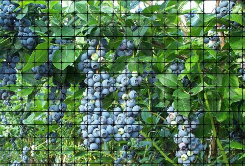 Pest Bird Animals Mesh Plastic Netting Blueberry