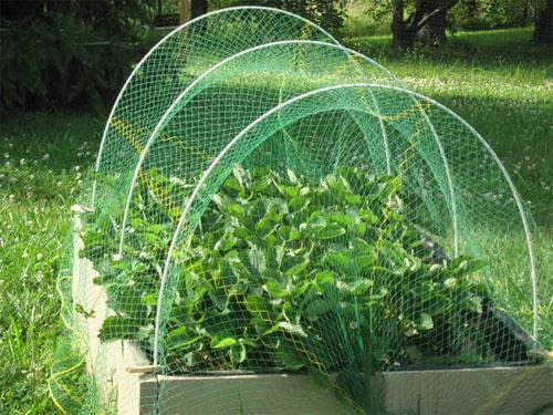 Pest Birds Small Animals Lightweight Netting Hoops Raised Bed