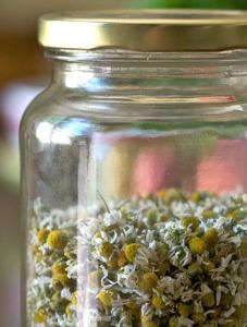 Chamomile Herb Dried Flowers Medicinal Glass Jar