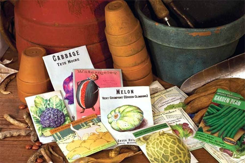 Seeds Exotic Unusual Rare Amazing!