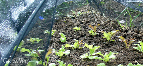 Seedlings Transplants Cover Protection Birds Shade