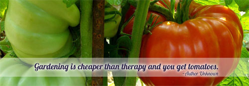 Gardening is cheaper than therapy and you get tomatoes!