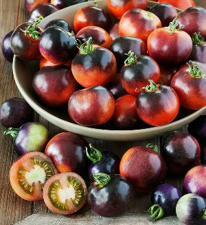 Tomato Indigo Rose Purple Anthocyanins